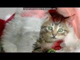 «новогодние котята» под музыку Юлия Савичева  - Новый год . Picrolla